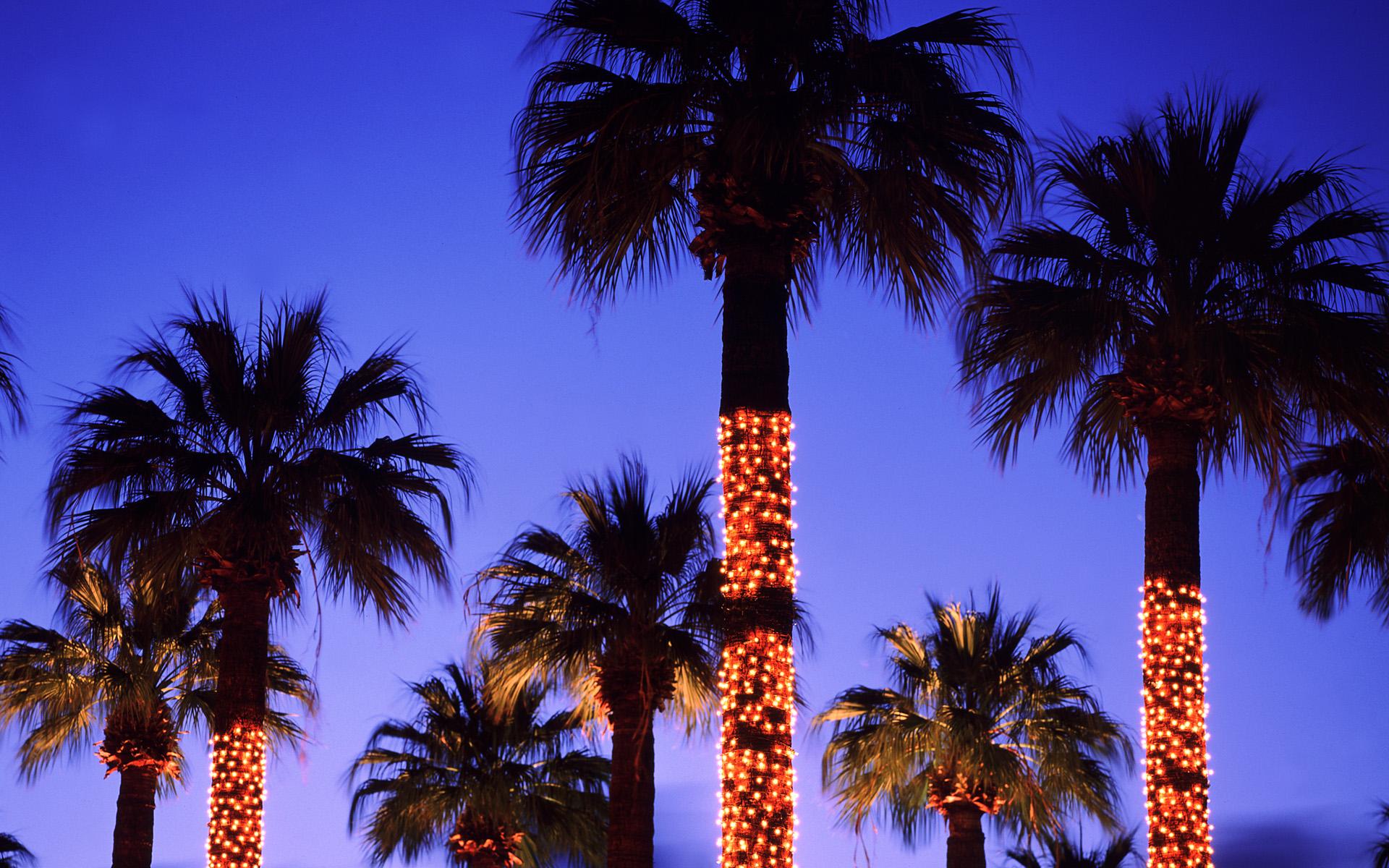 palm tree christmas lights wallpaper -#main