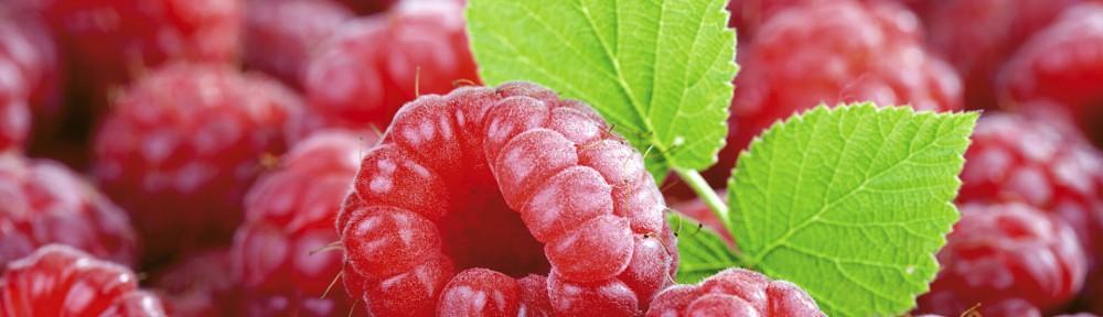 Fresh raspberries, close-up