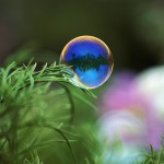 Bubble floating near grass, Furano, Hokkaido, Japan